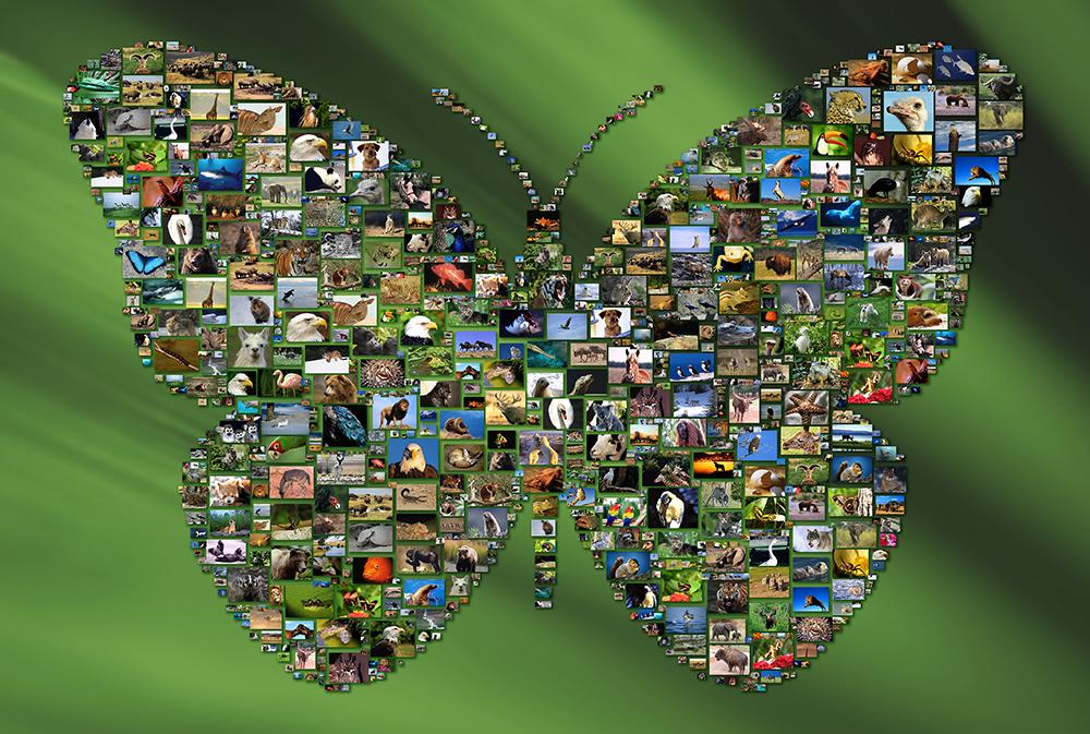 Shape Mosaics by Picture Mosaics