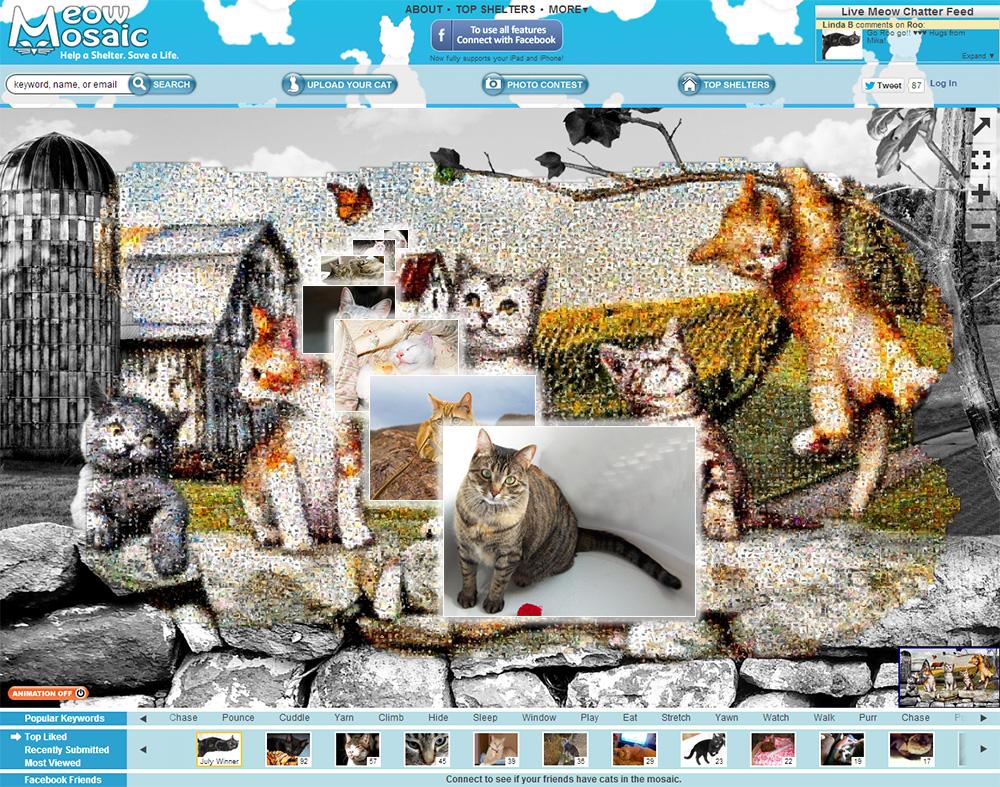 Interactive Mosaics - Meow Mosaic
