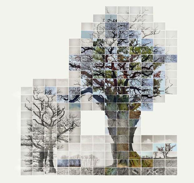 Noel Myles time-lapse photo mosaic