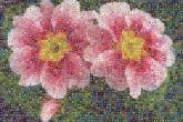 flowers nature garden outdoors outside nature plants patchwork quilting knitted