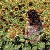 sunflowers outdoors nature portraits people faces profiles girl woman