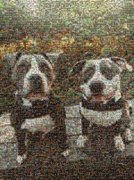 Two Happy Dogs photo mosaic
