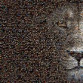 lion face animals artistic graphics gradient wildlife