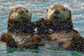 otters love float water animal wildlife species nature travel friendship