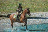 horses people distant equestrian sports activities animals