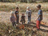 kids children cousins group boys girls toddlers outdoors pumpkins nature farms shadows sunny