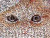 cat eyes pets kitten feline animals faces