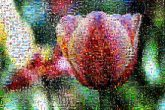 flowers colorful artistic nature tulips