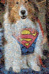 dogs pets animals superman logos symbols icons