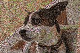 furbaby, dog, pet, love, family, mosaic, photo, pictures, collage, montage