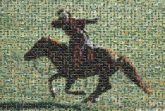horses equestrian animals sports