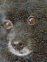 dogs animals puppy close up pets