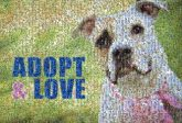 adoption pets dogs animals rescue love words text letters bold shelters organizations