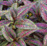 purple leaves plants nature growth bushes planet earth environment