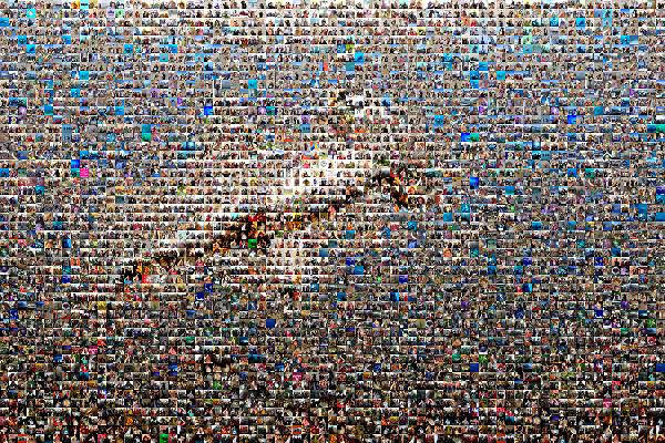 Hammerhead Shark photo mosaic