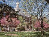 Campus Tree Spring Daytime Pink Residential area Property Landmark House Architecture Home