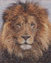 schools kids children headshots portraits lions animals mascots
