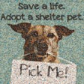 adoption adopting shelters animals dogs signs text words letters community rescue