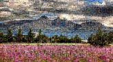 fields nature flowers landscapes mountains travel trees plants