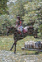 Eventing Hunt seat Equestrian Cross-country riding Stallion Competitive trail riding Rein Equitation Horse Bridle Vertebrate Halter Equestrianism Horse supplies Mammal Animal sports Saddle