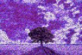 Wallpaper Sunset Cloud Image ChaseABag Fess Sky Natural landscape Lavender Purple Violet Nature Tree Daytime Field