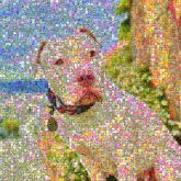 Dog breed American Pit Bull Terrier American Bulldog Bulldog Pit bull Bull Terrier Snout Terrier Mammal Vertebrate Canidae Carnivore Dog collar Non-Sporting Group