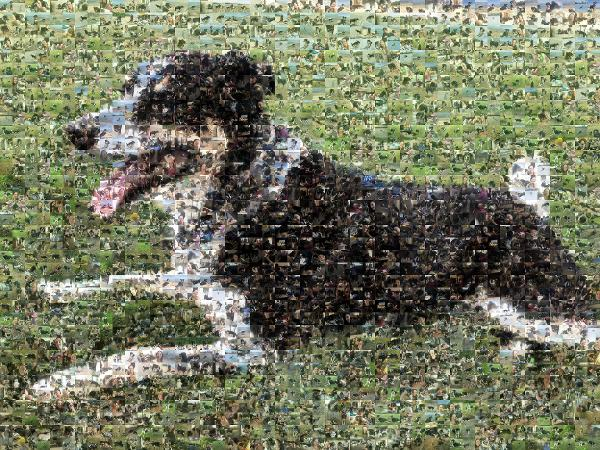English Shepherd photo mosaic