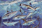 created using over 7,000 images of Bluefin supporters
