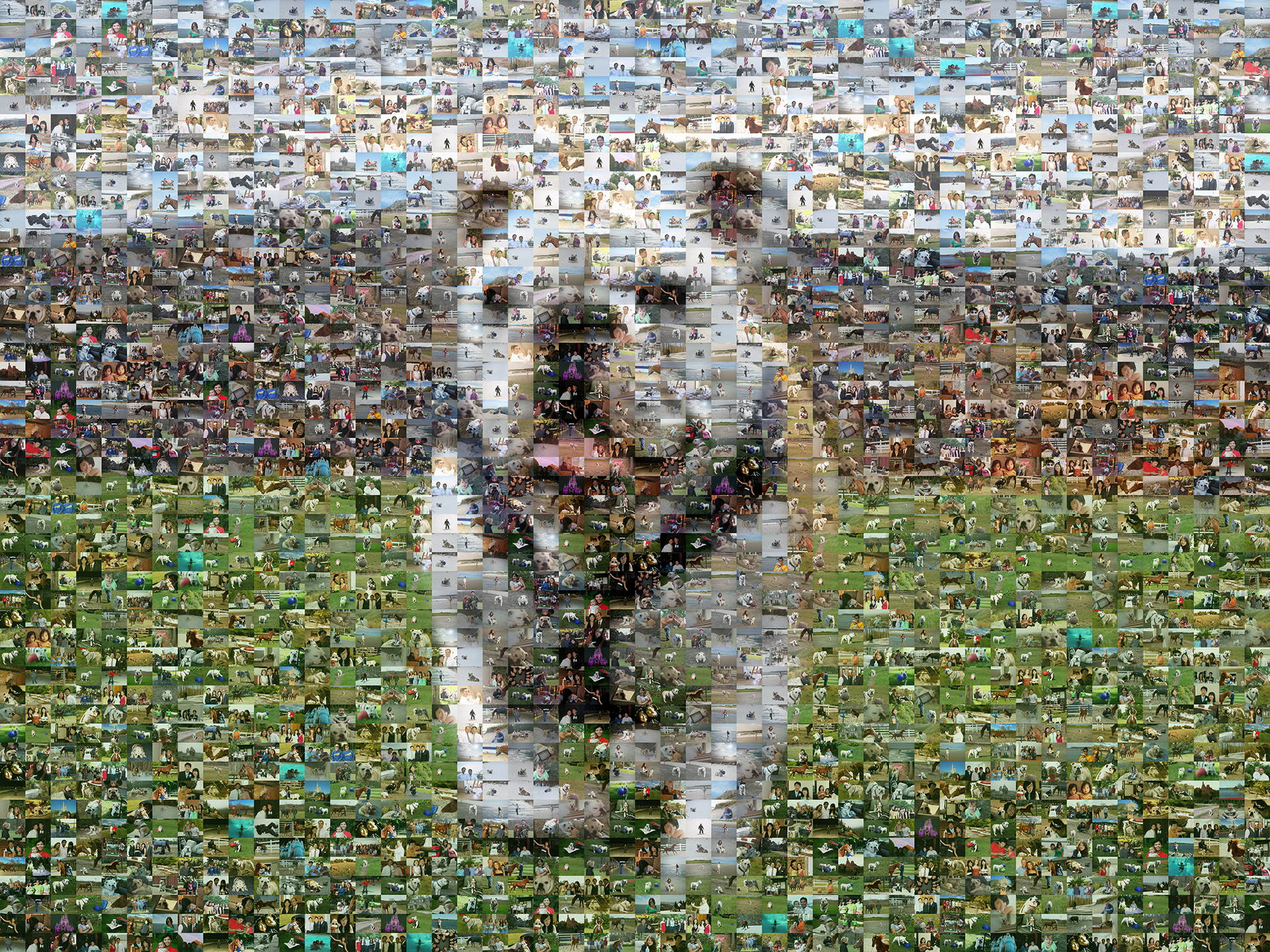 photo mosaic a mosaic of a favorite pet using 300 photos