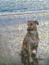 a serene dog sitting on the beach, created using 289 photos