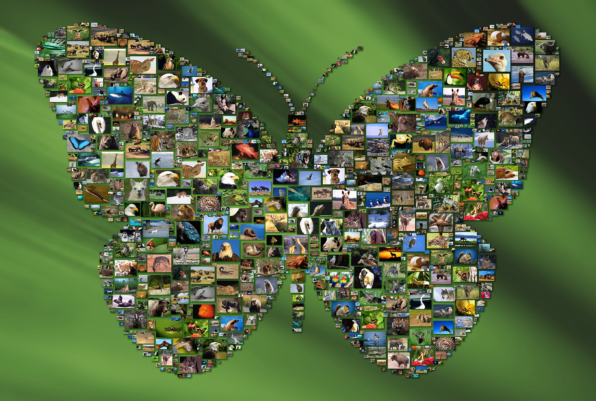 photo mosaic created using 386 wildlife photos on a custom backdrop